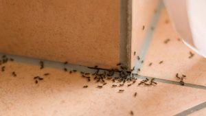 ابادة النمل